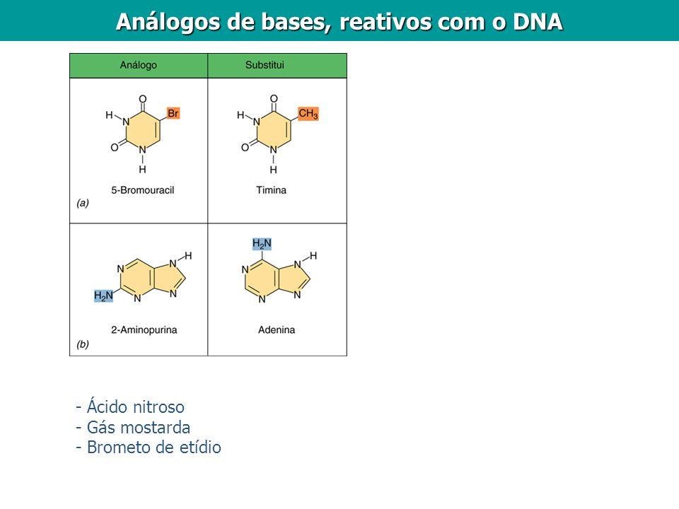 Análogos de bases, reativos com o DNA - Ácido nitroso - Gás mostarda - Brometo de etídio