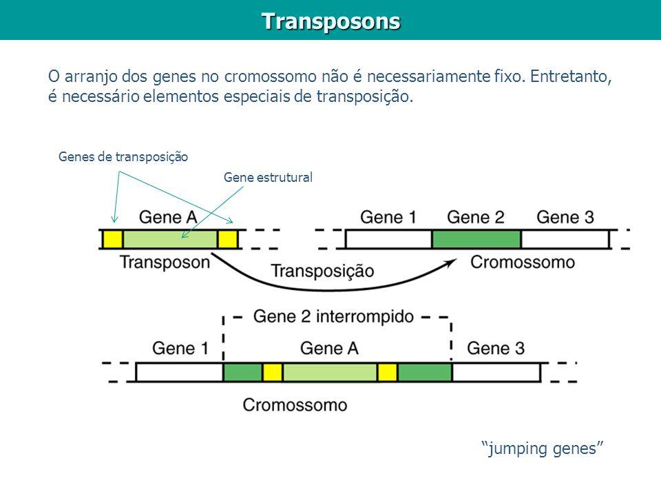 Transposons O arranjo dos genes no cromossomo não é necessariamente fixo. Entretanto, é necessário elementos especiais de transposição. jumping genes