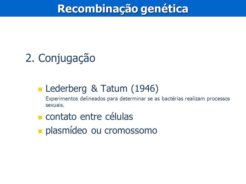 2. Conjugação Lederberg & Tatum (1946) Experimentos delineados para determinar se as bactérias realizam processos sexuais. contato entre células plasm