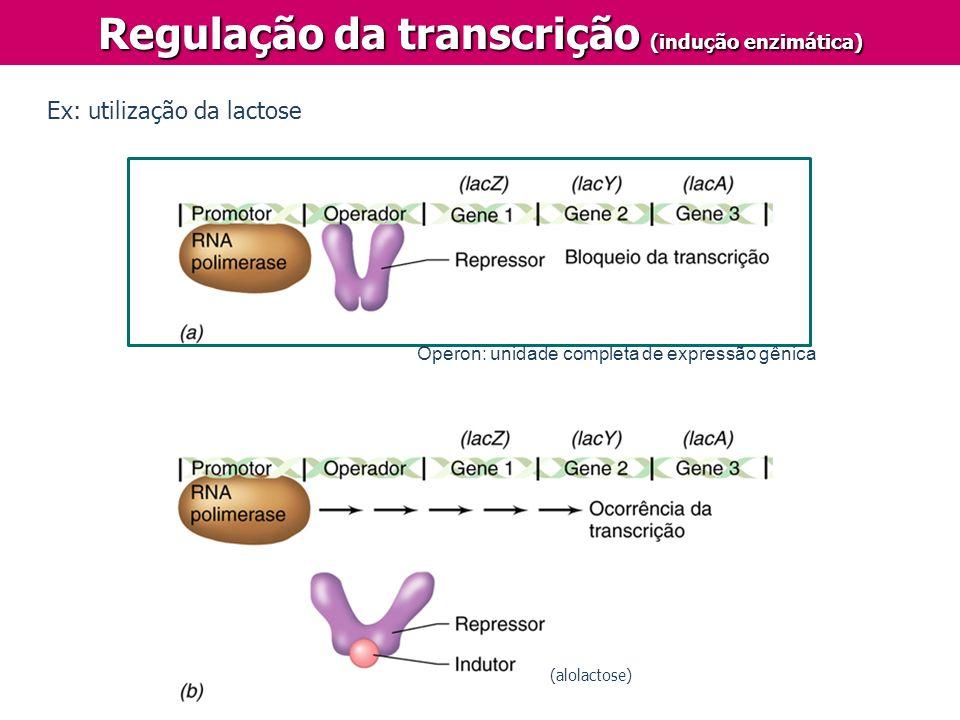 Regulação da transcrição (indução enzimática) Operon: unidade completa de expressão gênica Ex: utilização da lactose (alolactose)