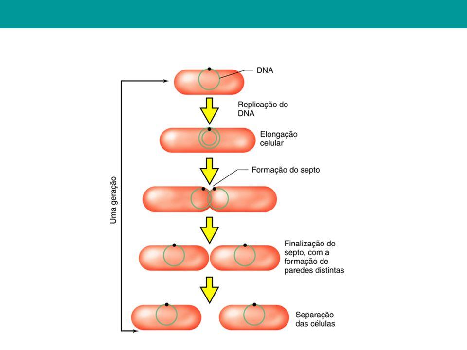 Formação de um novo genótipo através da troca de material genético entre DNAs.