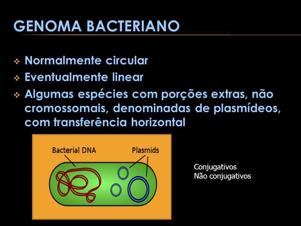 GENOMA BACTERIANO Normalmente circular Eventualmente linear Algumas espécies com porções extras, não cromossomais, denominadas de plasmídeos, com tran