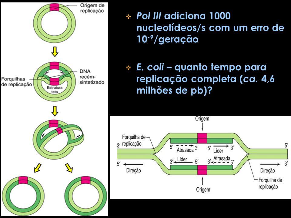 Pol III adiciona 1000 nucleotídeos/s com um erro de 10 -9 /geração E. coli – quanto tempo para replicação completa ( ca. 4,6 milhões de pb)?