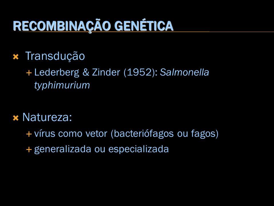 RECOMBINAÇÃO GENÉTICA Transdução Lederberg & Zinder (1952): Salmonella typhimurium Natureza: vírus como vetor (bacteriófagos ou fagos) generalizada ou