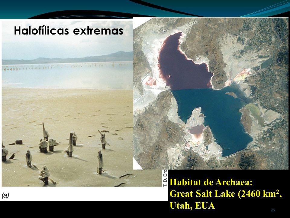 Habitat de Archaea: Great Salt Lake (2460 km 2, Utah, EUA Halofílicas extremas 33