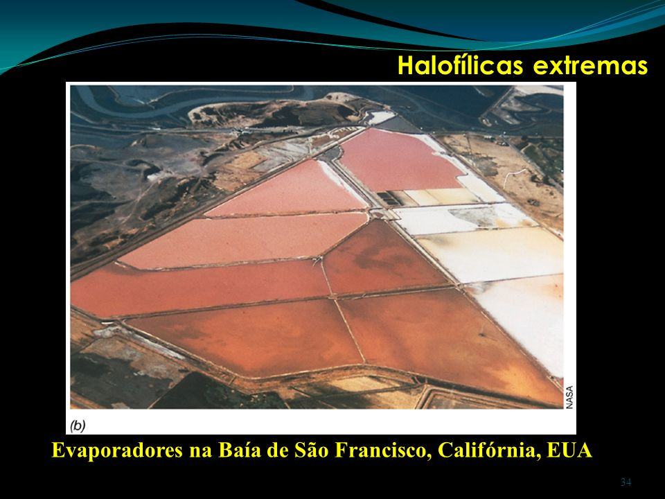 Halofílicas extremas Evaporadores na Baía de São Francisco, Califórnia, EUA 34