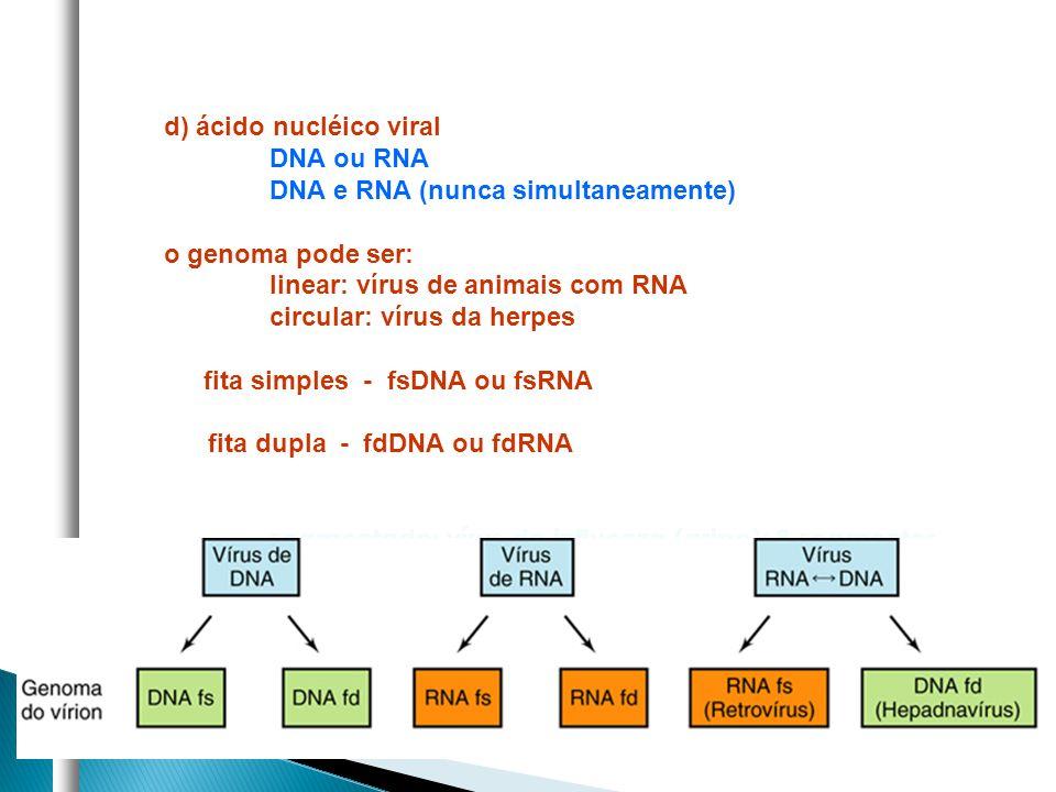 d) ácido nucléico viral DNA ou RNA DNA e RNA (nunca simultaneamente) o genoma pode ser: linear: vírus de animais com RNA circular: vírus da herpes fit