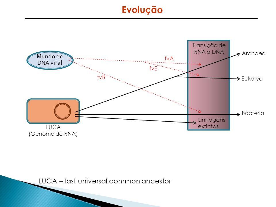 Mundo de DNA viral LUCA (Genoma de RNA) LUCA = last universal common ancestor Archaea Eukarya Bacteria Linhagens extintas Transição de RNA a DNA fvA f