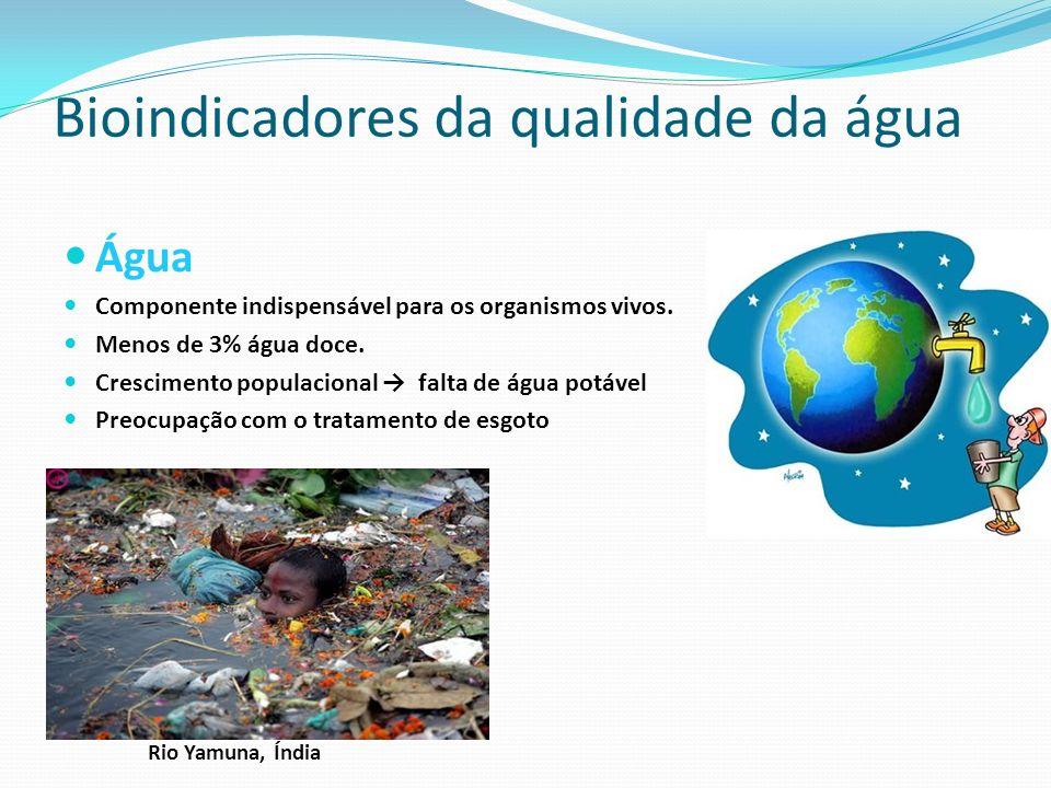 Água Componente indispensável para os organismos vivos. Menos de 3% água doce. Crescimento populacional falta de água potável Preocupação com o tratam