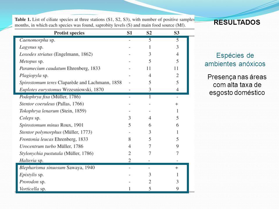 Espécies de ambientes anóxicos Presença nas áreas com alta taxa de esgosto doméstico RESULTADOS