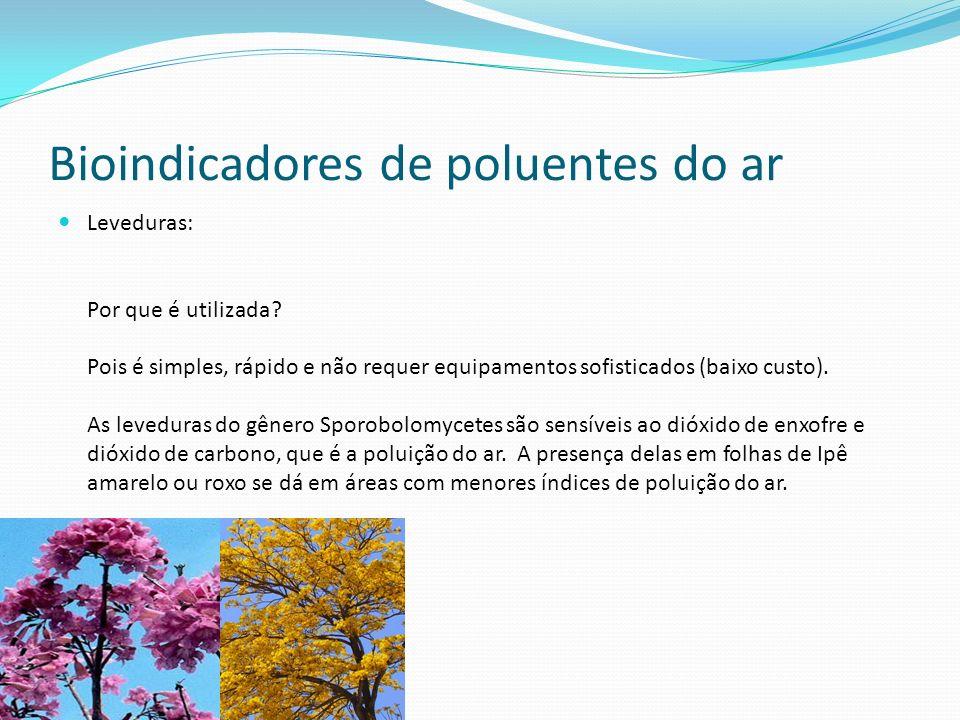 Bioindicadores de poluentes do ar Leveduras: Por que é utilizada? Pois é simples, rápido e não requer equipamentos sofisticados (baixo custo). As leve