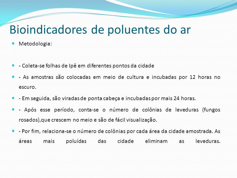 Bioindicadores de poluentes do ar Metodologia: - Coleta-se folhas de Ipê em diferentes pontos da cidade - As amostras são colocadas em meio de cultura e incubadas por 12 horas no escuro.