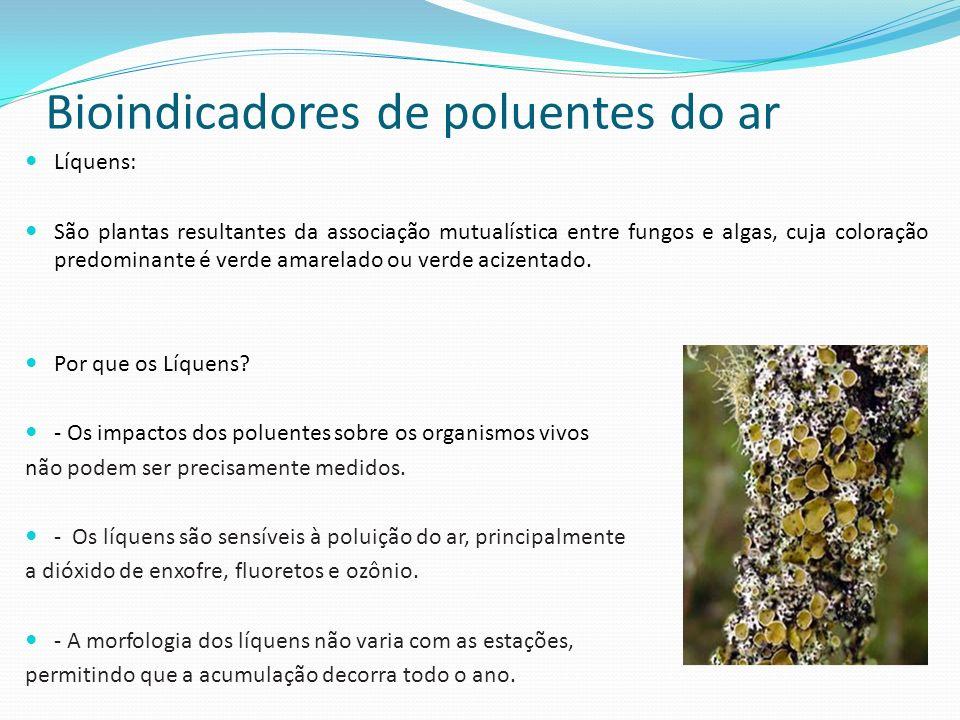 Bioindicadores de poluentes do ar Líquens: São plantas resultantes da associação mutualística entre fungos e algas, cuja coloração predominante é verde amarelado ou verde acizentado.