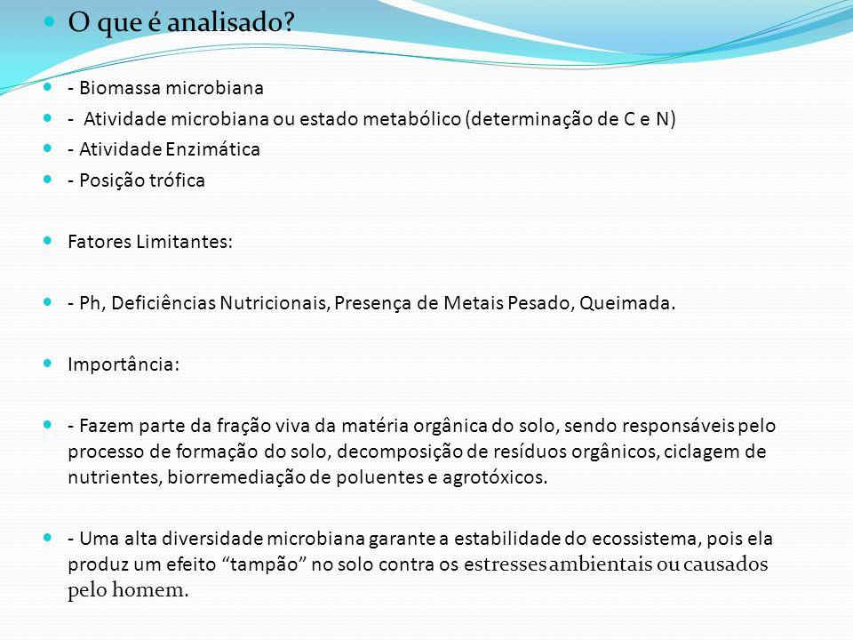 O que é analisado? - Biomassa microbiana - Atividade microbiana ou estado metabólico (determinação de C e N) - Atividade Enzimática - Posição trófica