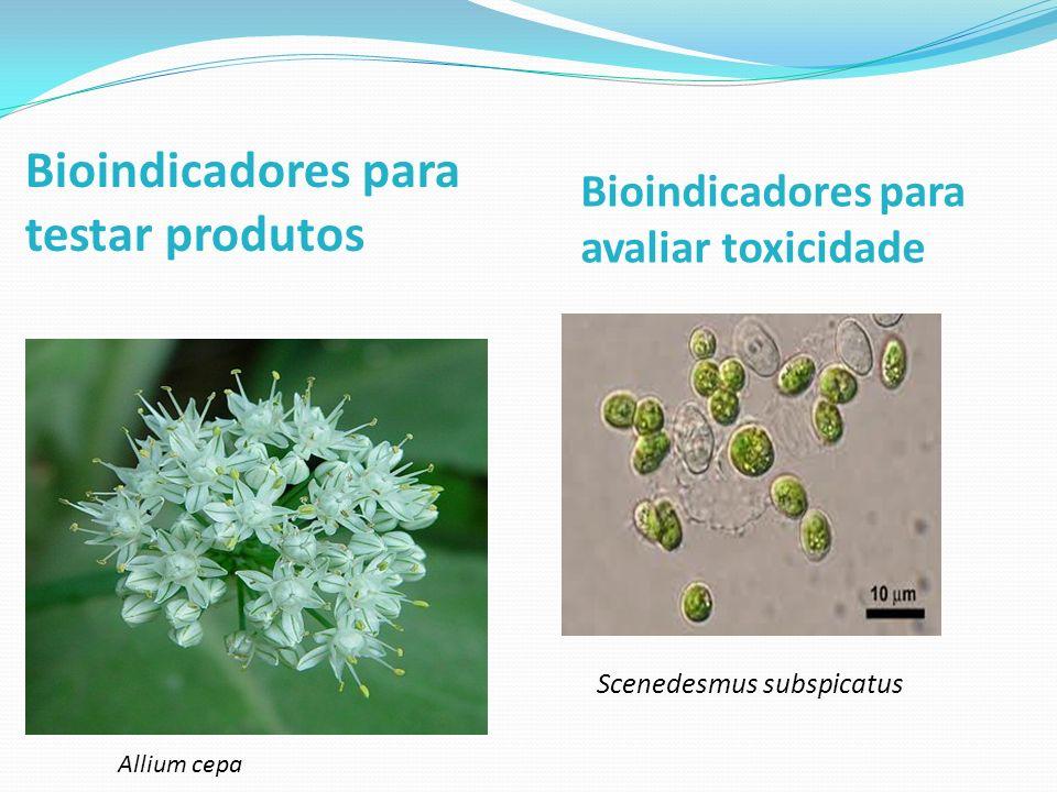 Bioindicadores para testar produtos Allium cepa Bioindicadores para avaliar toxicidade Scenedesmus subspicatus