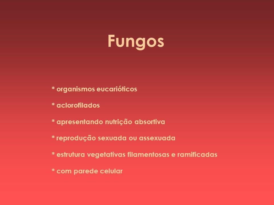 * organismos eucarióticos * aclorofilados * apresentando nutrição absortiva * reprodução sexuada ou assexuada * estrutura vegetativas filamentosas e r