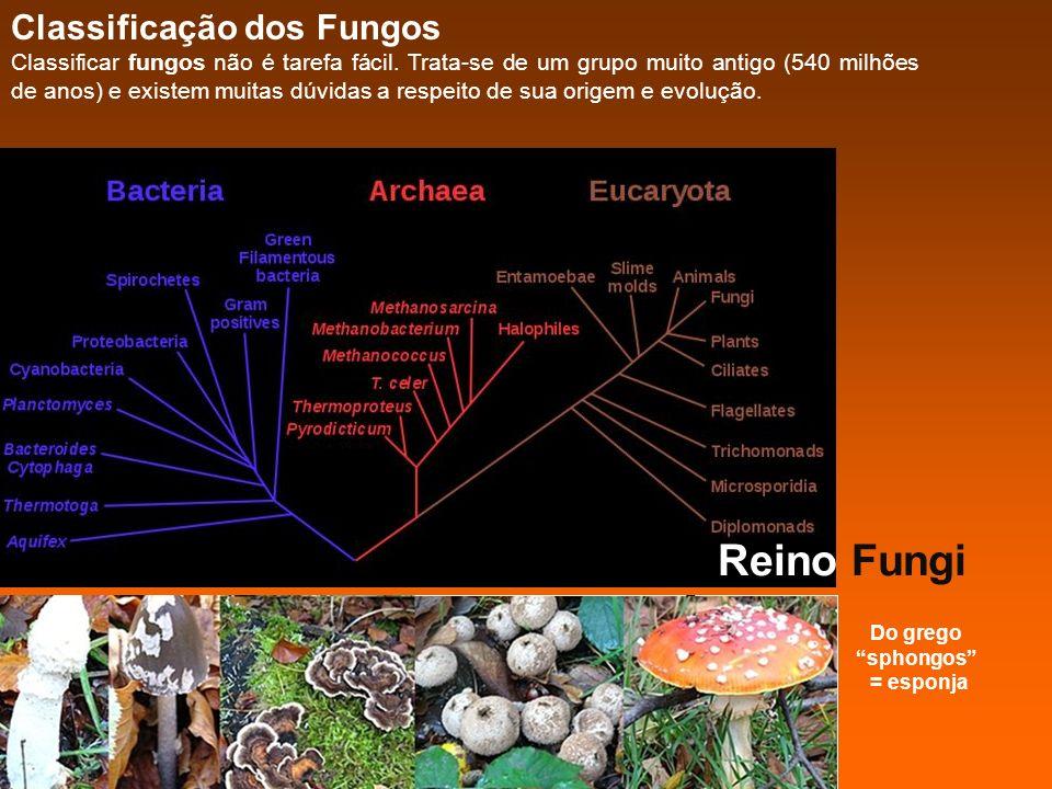 Do grego sphongos = esponja Reino Fungi Classificação dos Fungos Classificar fungos não é tarefa fácil. Trata-se de um grupo muito antigo (540 milhões