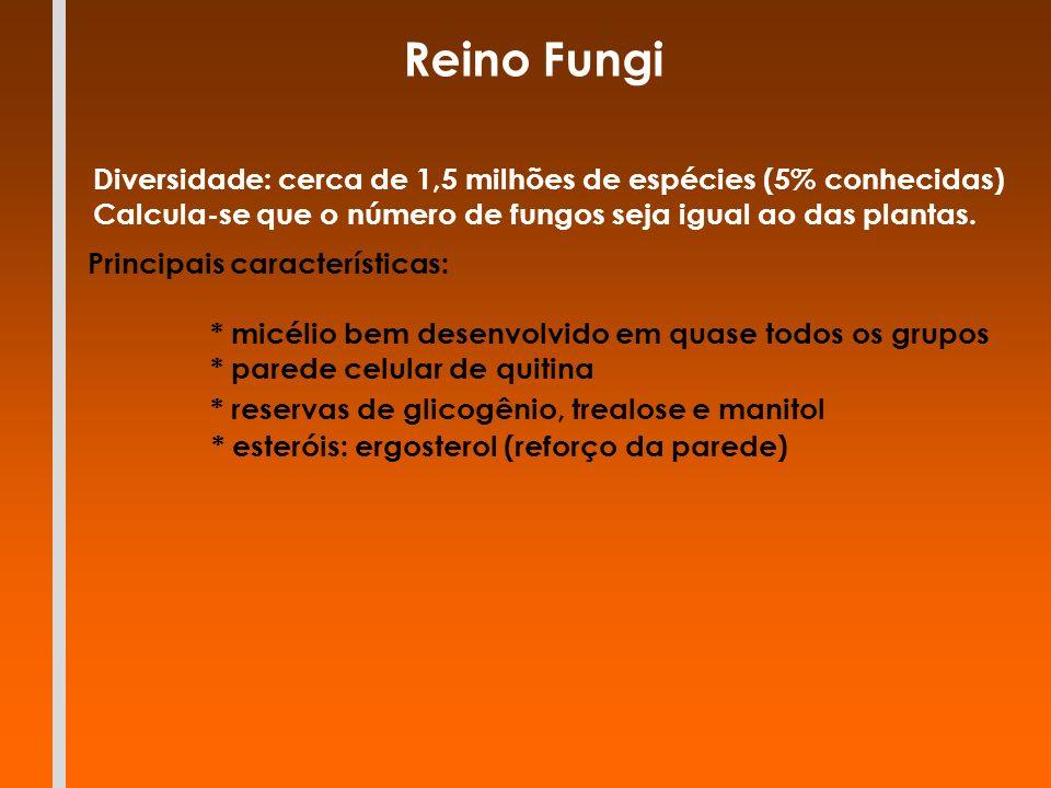 Reino Fungi Principais características: * parede celular de quitina * micélio bem desenvolvido em quase todos os grupos * reservas de glicogênio, trea