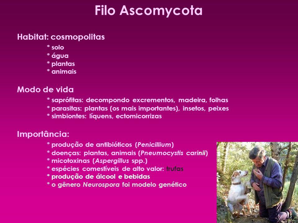 Filo Ascomycota Habitat: cosmopolitas * solo * água * plantas * animais Modo de vida * saprófitas: decompondo excrementos, madeira, folhas * parasitas