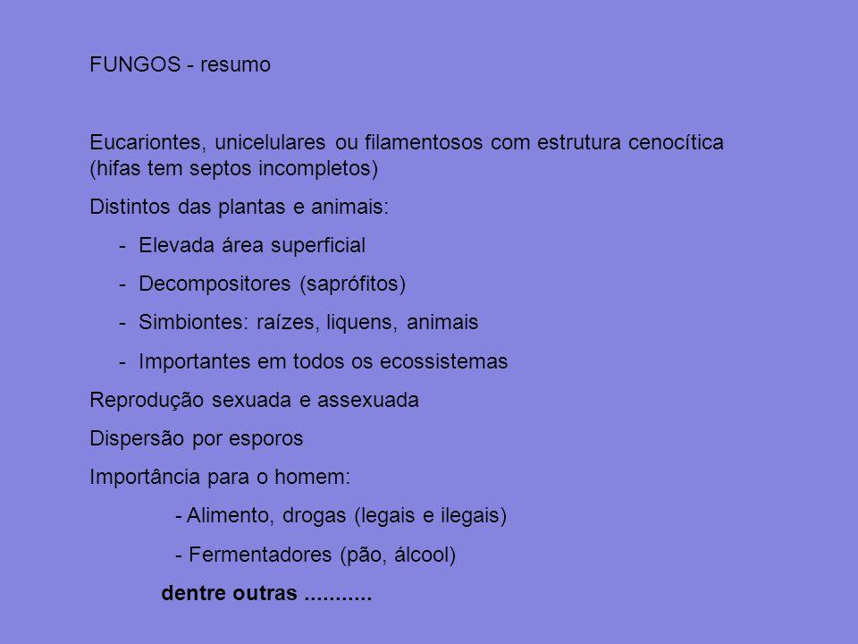 FUNGOS - resumo Eucariontes, unicelulares ou filamentosos com estrutura cenocítica (hifas tem septos incompletos) Distintos das plantas e animais: - E