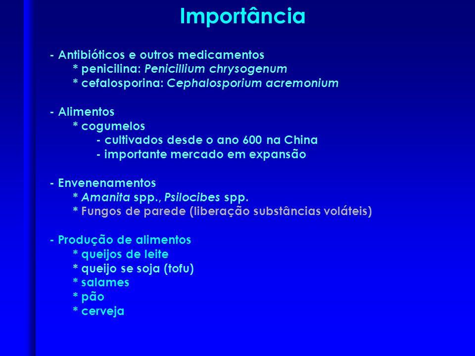 Reprodução tipos de esporos assexuais: - esporangiósporos - conídios - zoósporos: esporos móveis produzidos em zoosporângios (Oomycota) zoosporângio zoósporos