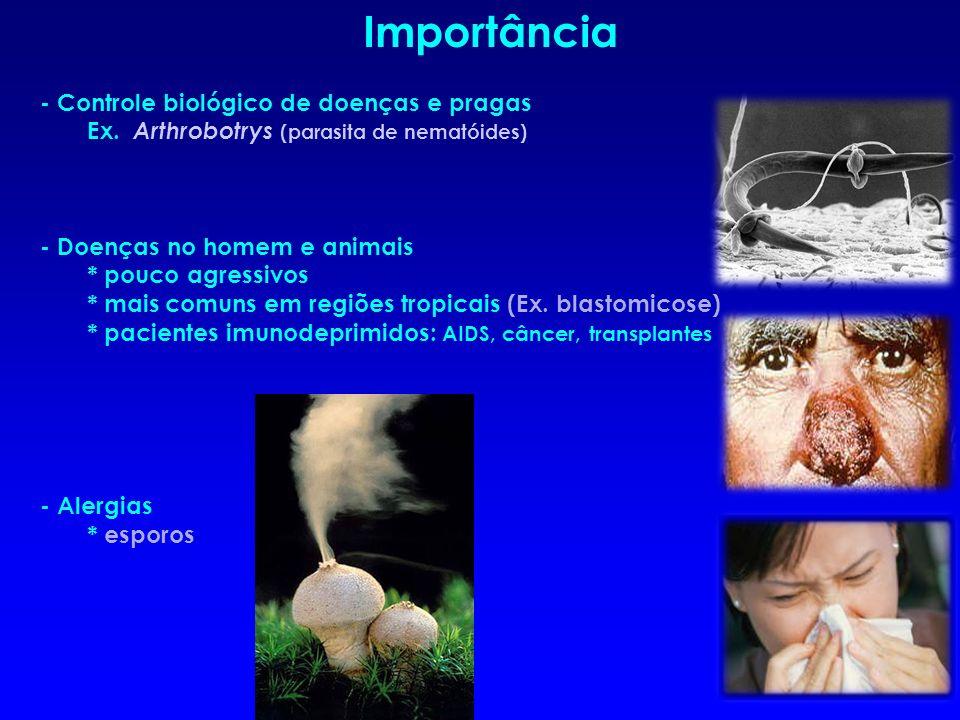 - Controle biológico de doenças e pragas Ex. Arthrobotrys (parasita de nematóides) - Doenças no homem e animais * pouco agressivos * mais comuns em re