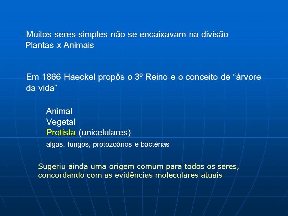 - Muitos seres simples não se encaixavam na divisão Plantas x Animais Em 1866 Haeckel propôs o 3º Reino e o conceito de árvore da vida Animal Vegetal