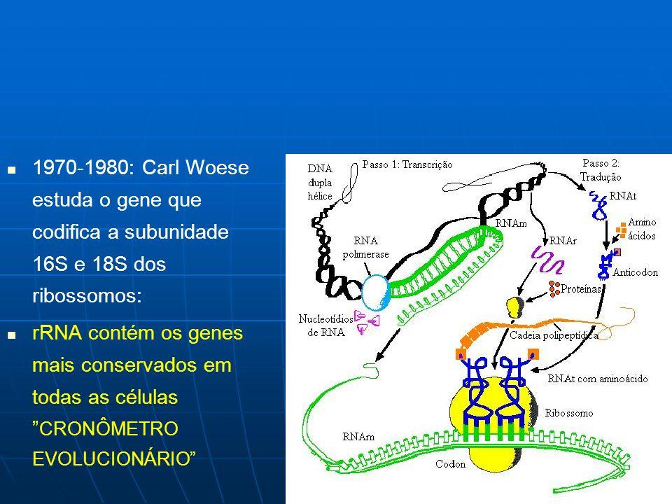 1970-1980: Carl Woese estuda o gene que codifica a subunidade 16S e 18S dos ribossomos: rRNA contém os genes mais conservados em todas as células CRON
