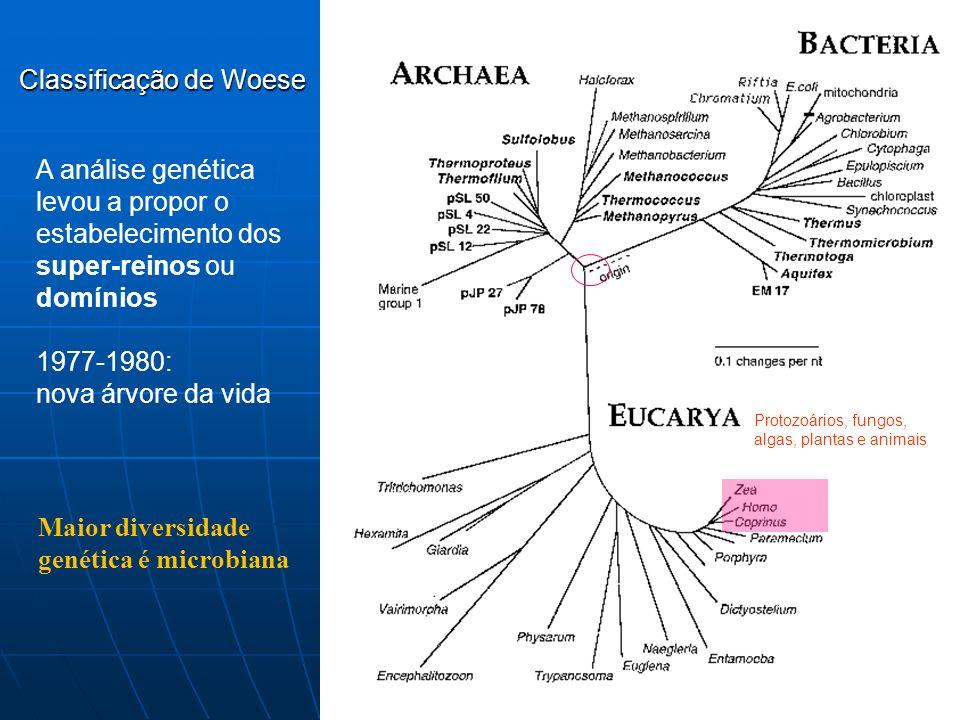 Maior diversidade genética é microbiana Classificação de Woese Protozoários, fungos, algas, plantas e animais A análise genética levou a propor o esta