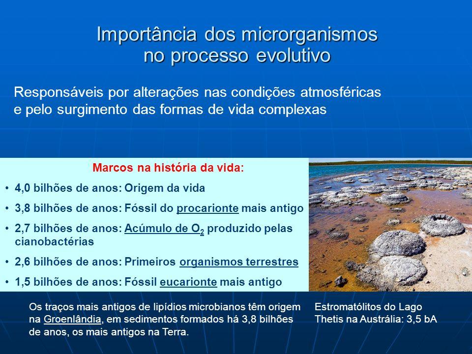 Importância dos microrganismos no processo evolutivo Marcos na história da vida: 4,0 bilhões de anos: Origem da vida 3,8 bilhões de anos: Fóssil do pr