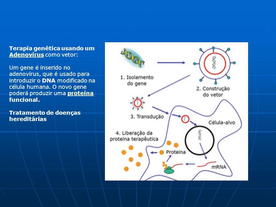 A idade de ouro da Microbiologia (1875-1915) Estabelecimento da microbiologia como ciência Novos ramos: Ecologia Microbiana Ecologia Microbiana Descoberta da importância das bactérias na ciclagem dos nutrientes (C, N, S, P) (Winogradski e Beijerinck) Imunologia Imunologia vacinas imunoglobulinas anticorpos monoclonais