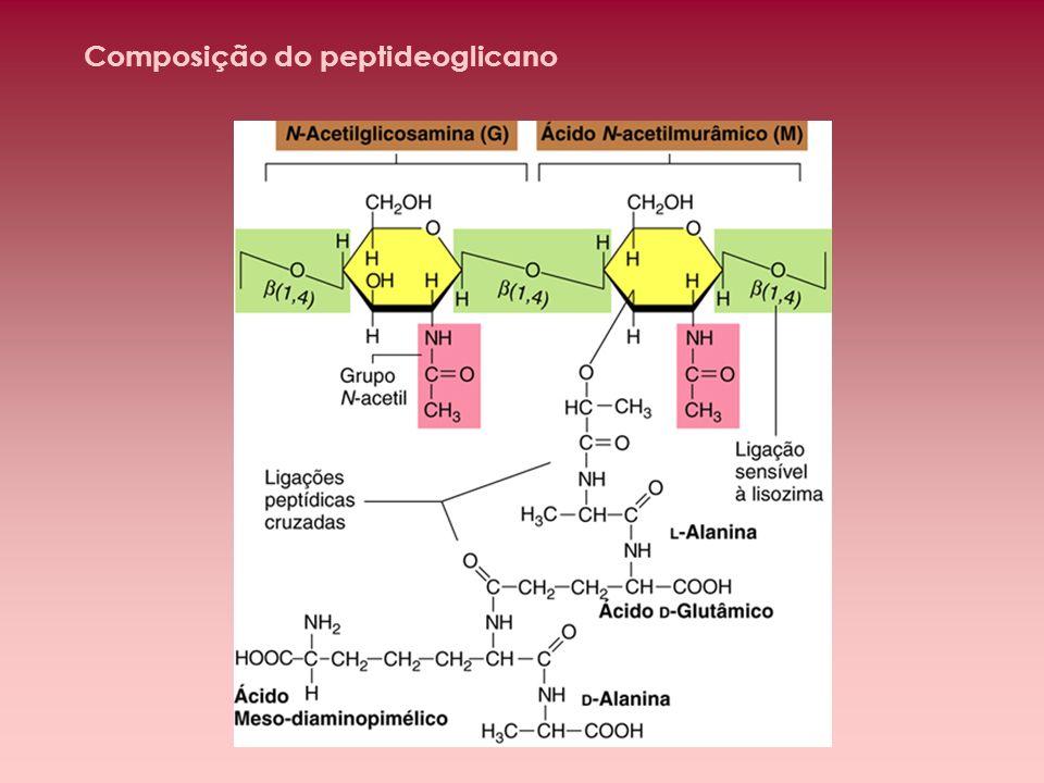 Composição do peptideoglicano