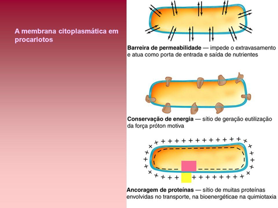 A membrana citoplasmática em procariotos