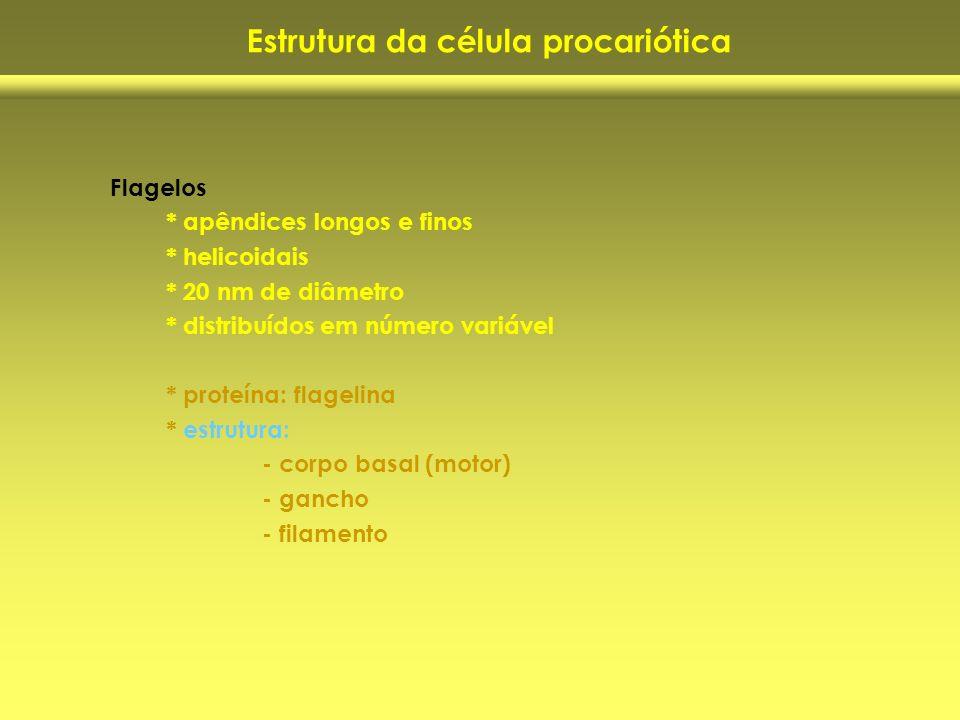 Estrutura da célula procariótica Flagelos * apêndices longos e finos * helicoidais * 20 nm de diâmetro * distribuídos em número variável * proteína: f