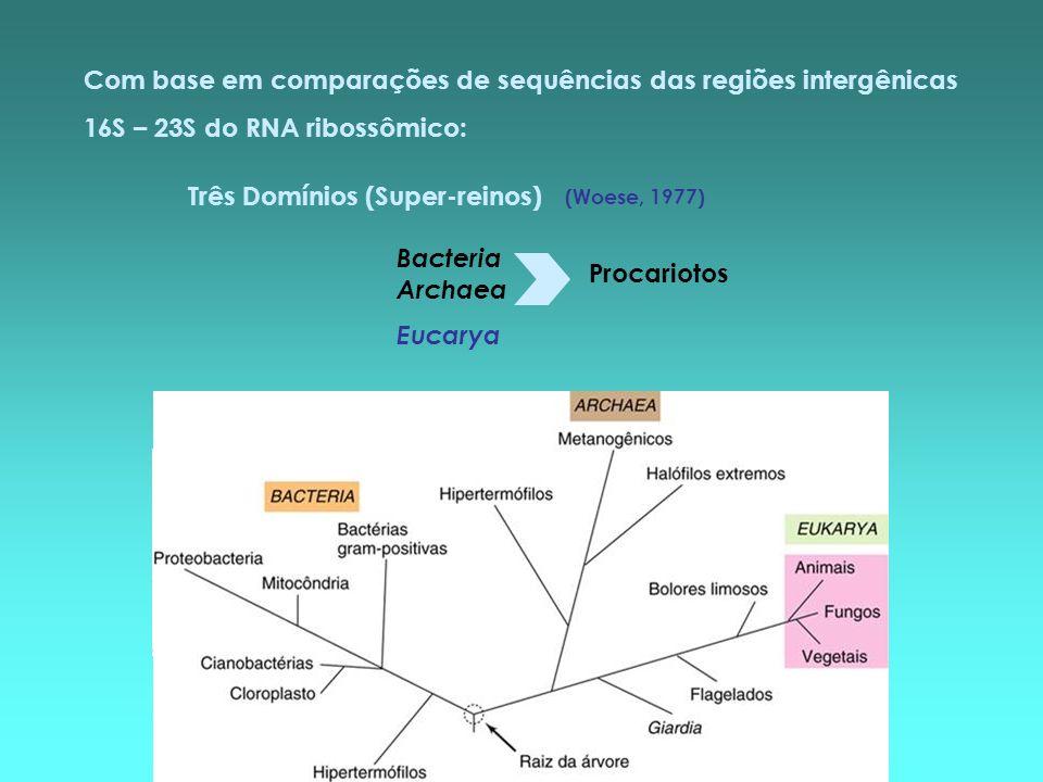 Com base em comparações de sequências das regiões intergênicas 16S – 23S do RNA ribossômico: Três Domínios (Super-reinos) Bacteria Archaea Eucarya Pro