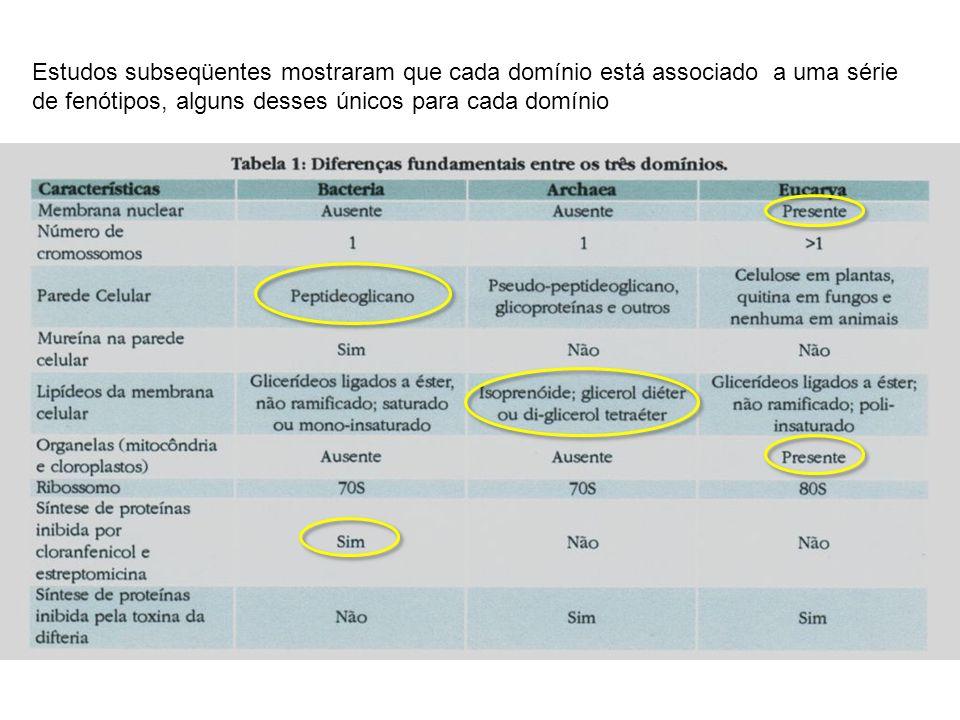 Cromatóforos e Clorossomas Presentes e bactérias fotossintetizantes Ex: bactérias sulfurosas verdes