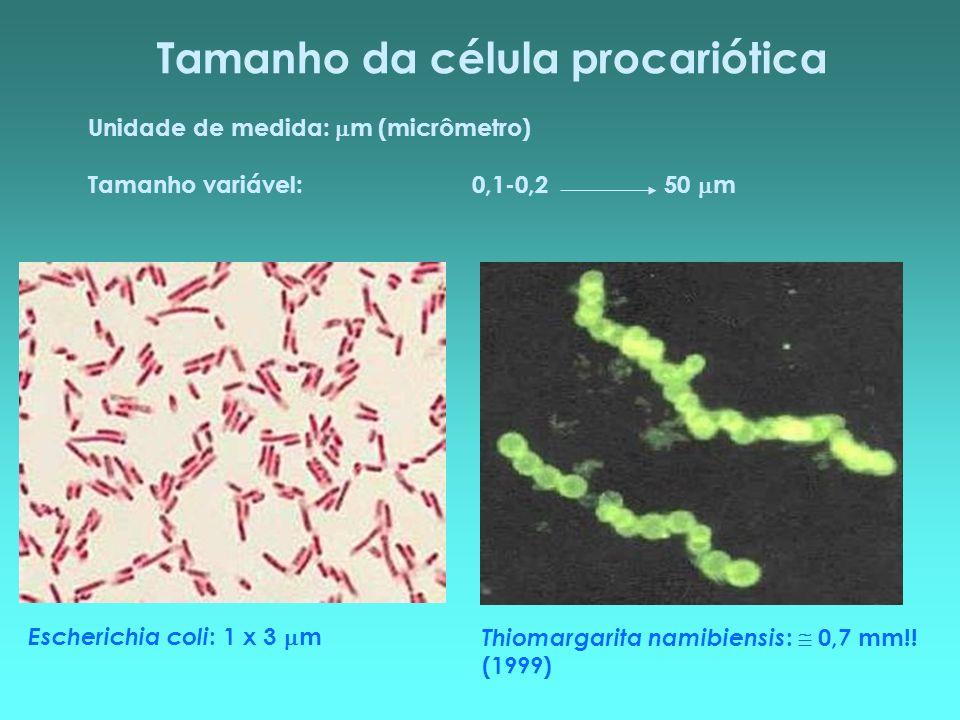 Tamanho da célula procariótica Unidade de medida: m (micrômetro) Tamanho variável:0,1-0,250 m Thiomargarita namibiensis : 0,7 mm!! (1999) Escherichia