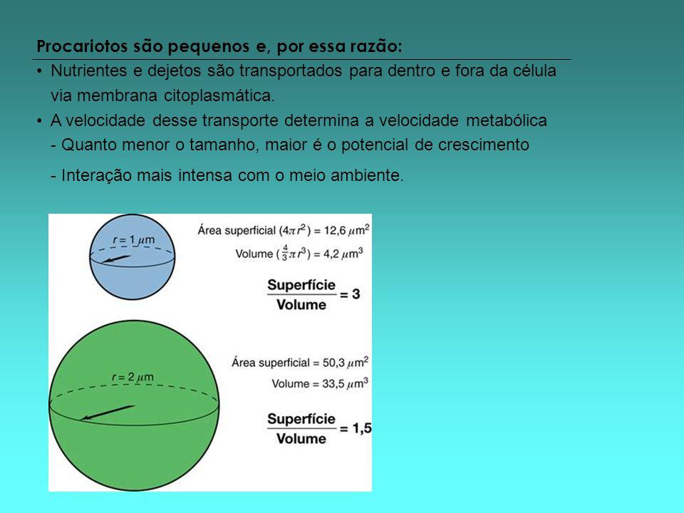 Procariotos são pequenos e, por essa razão: Nutrientes e dejetos são transportados para dentro e fora da célula via membrana citoplasmática. A velocid
