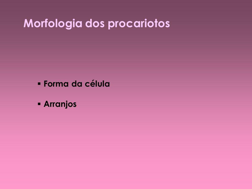Morfologia dos procariotos: formas Cocos ( Neisseria ) Bacilos ( Halobacterium / Salmonella ) Vibrião ( Bdellovibrio ) Espirilo Espiroqueta ( Leptospira ) Pedunculada ( Rhodomicrobium ) Cianobactérias ( Myxococcus )
