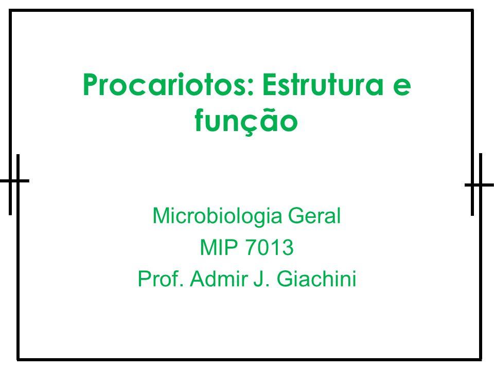 Procariotos: Estrutura e função Microbiologia Geral MIP 7013 Prof. Admir J. Giachini