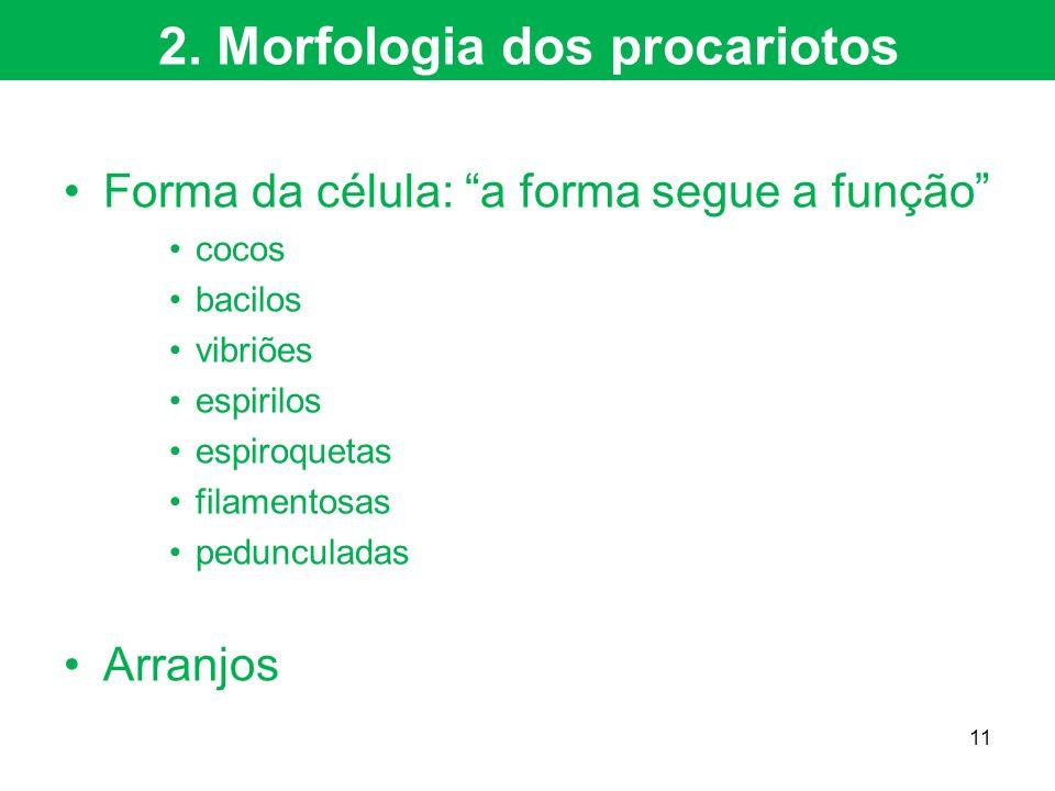 Forma da célula: a forma segue a função cocos bacilos vibriões espirilos espiroquetas filamentosas pedunculadas Arranjos 2. Morfologia dos procariotos