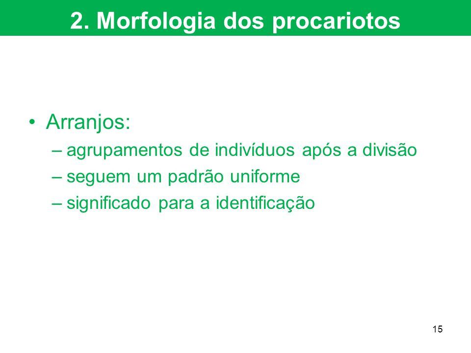 Arranjos: –agrupamentos de indivíduos após a divisão –seguem um padrão uniforme –significado para a identificação 2. Morfologia dos procariotos 15
