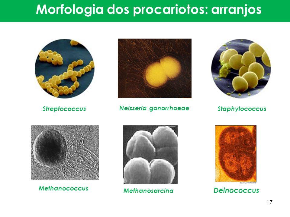 Streptococcus Neisseria gonorrhoeae Staphylococcus Methanococcus Methanosarcina Deinococcus Morfologia dos procariotos: arranjos 17