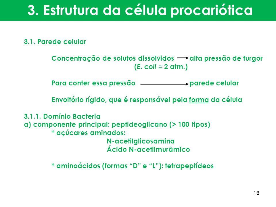 3.1. Parede celular Concentração de solutos dissolvidosalta pressão de turgor ( E. coli 2 atm.) Para conter essa pressãoparede celular Envoltório rígi
