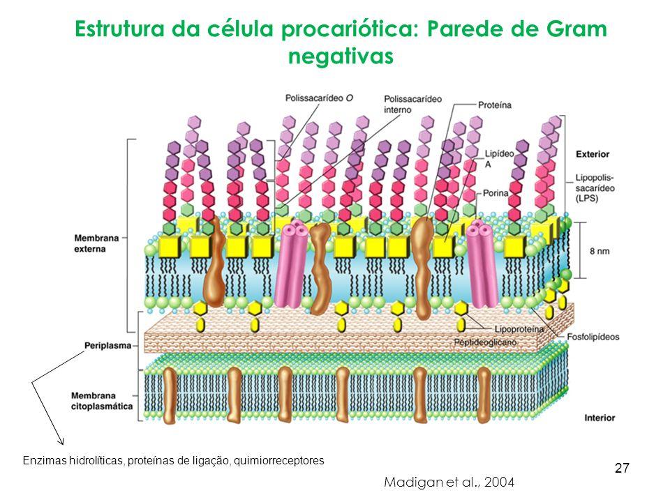 Estrutura da célula procariótica: Parede de Gram negativas Madigan et al., 2004 Enzimas hidrolíticas, proteínas de ligação, quimiorreceptores 27