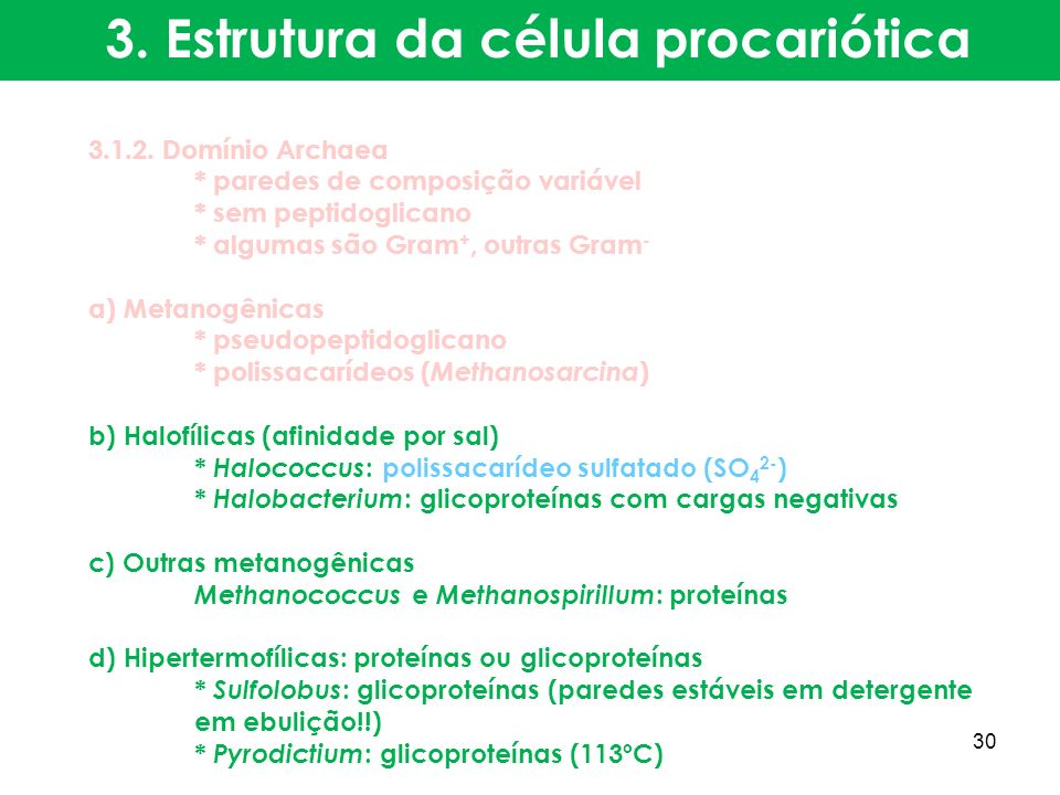 3. Estrutura da célula procariótica 3.1.2. Domínio Archaea * paredes de composição variável * sem peptidoglicano * algumas são Gram +, outras Gram - a