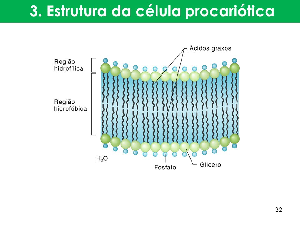 3. Estrutura da célula procariótica 32