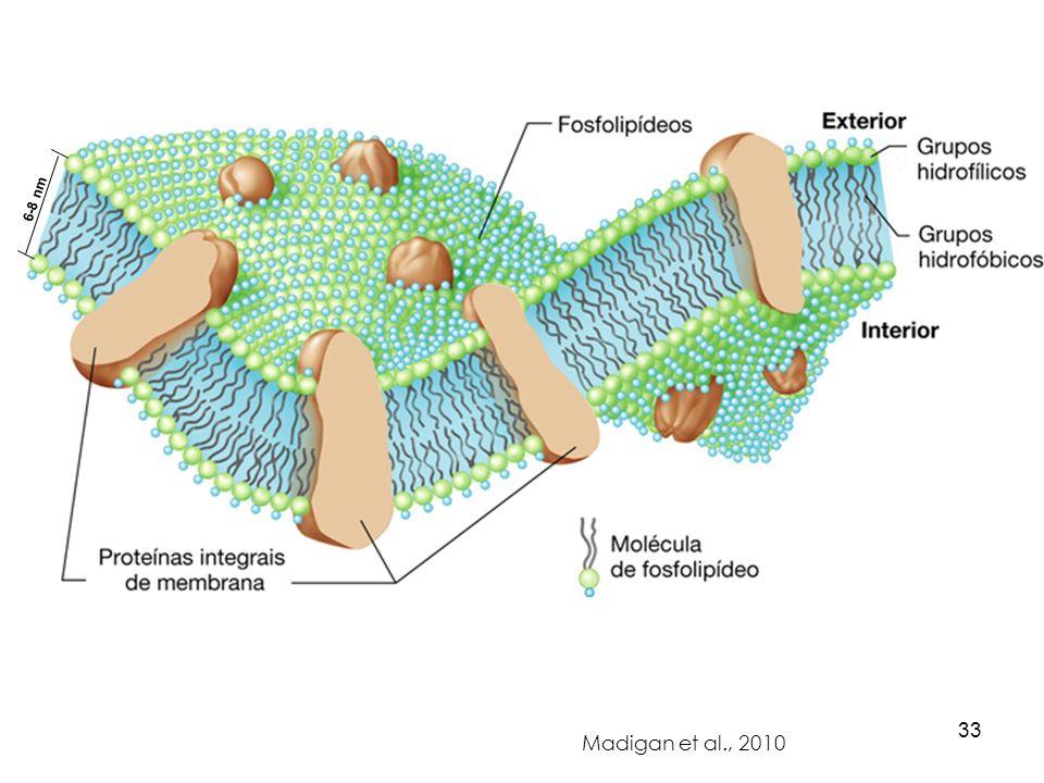Madigan et al., 2010 6-8 nm 33