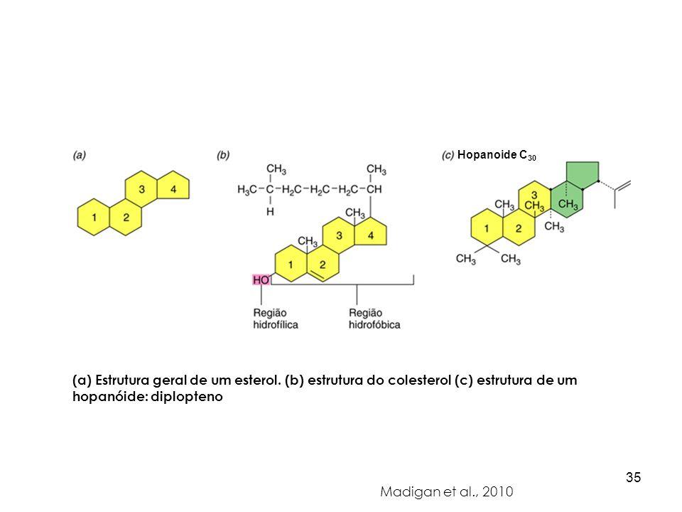 (a) Estrutura geral de um esterol. (b) estrutura do colesterol (c) estrutura de um hopanóide: diplopteno Madigan et al., 2010 Hopanoide C 30 35