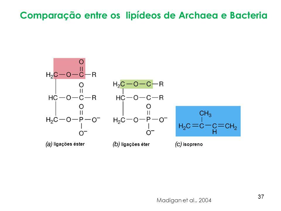 Comparação entre os lipídeos de Archaea e Bacteria Madigan et al., 2004 ligações éster ligações éter isopreno 37